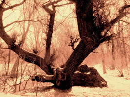 The Old Tree by Aivaseda