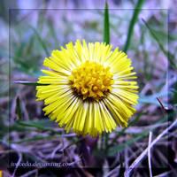 Finally Spring by Aivaseda