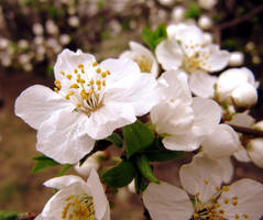 My Spring by Aivaseda