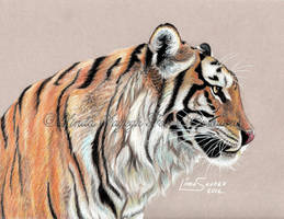 Tiger Tiger by Artsy50