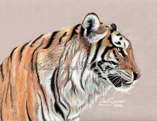 Tiger Tiger by Artsy50