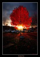 Autumn Sun by AsianRedneck