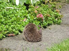 baby hedgehog leg :D by Peatree