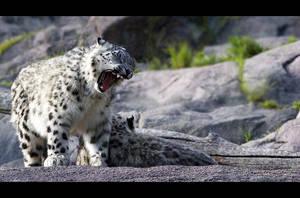 Yawn by Solkku