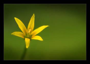 Petals of Gold by Solkku