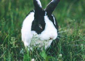 Happy Bunny. by Lumimyrskydawn