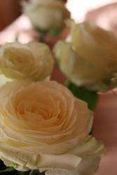 Roses by AmayaHoshi