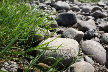 Grass and stones by AmayaHoshi