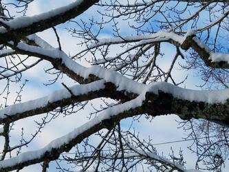 Bellingham Winter-12Feb2018-S07 by SkyfireDragon