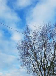 Bellingham Winter-12Feb2018-S10 by SkyfireDragon