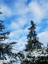 Bellingham Winter-12Feb2018-S14 by SkyfireDragon