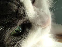 Freak Eyes of my Cat by Mirally