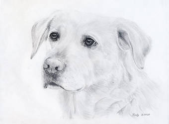 Vanille, first dog i've draw by Mirally