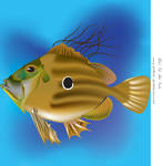 Iluustration John Dory by DragonAotearoa