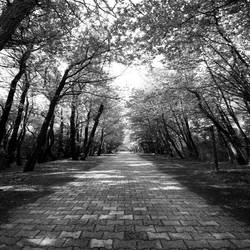 a path to neverland by QUEEN-OF-LONELESS