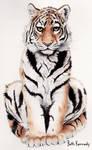 Tiger by CaptainBeth