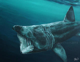 Devon Wildlife: Basking Shark by odontocete