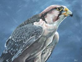 Savanna - Lanner falcon by odontocete