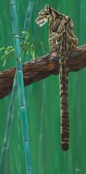 Suhana - Clouded leopard by odontocete