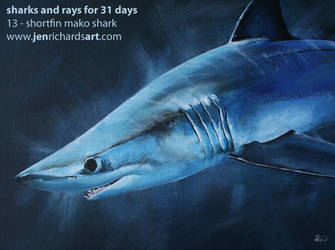 Shortfin Mako: Sharks and Rays for 31 Days by odontocete