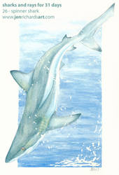 Spinner Shark: Sharks and Rays for 31 Days by odontocete