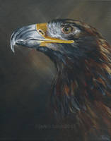Golden eagle by odontocete