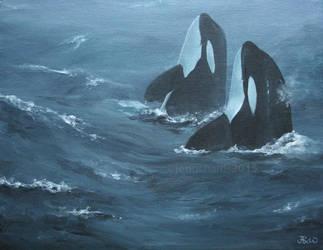 Storm Orcas by odontocete
