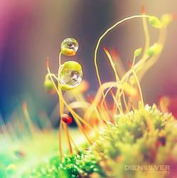 My fantasy dews by diensilver