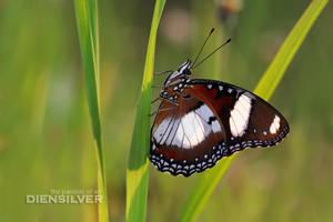 Inner beauty by diensilver