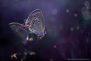 In my blue dreams by diensilver
