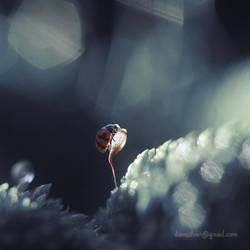 I'm a dreamer .. by diensilver