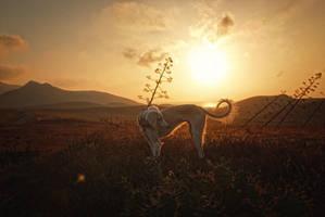 Dawn... by Alyat