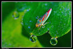 Leafhopper by CecilyAndreuArtwork