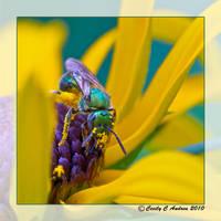 Metallic Green Bee II by CecilyAndreuArtwork