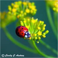 Ladybug by CecilyAndreuArtwork