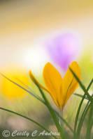 Sign Of Spring by CecilyAndreuArtwork