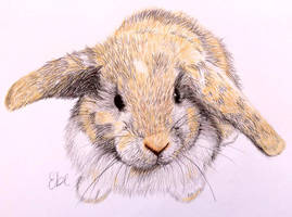Portrait of a rabbit by Sunflowerhebe