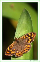 Butterfly by ikari-luis