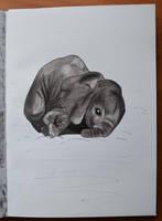 Baby elephant by Irik77