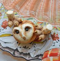 Barn Owl 001 by Irik77