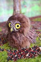 Owls 004 by Irik77
