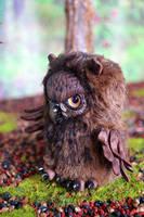 Owls 003 by Irik77