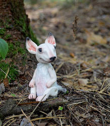 Bullterrier 008 by Irik77