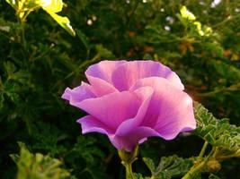 The Morning Flower by TaGiRoCkS