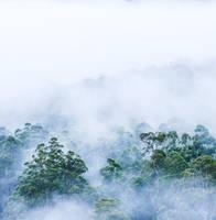 Foggy Morning II by TaGiRoCkS