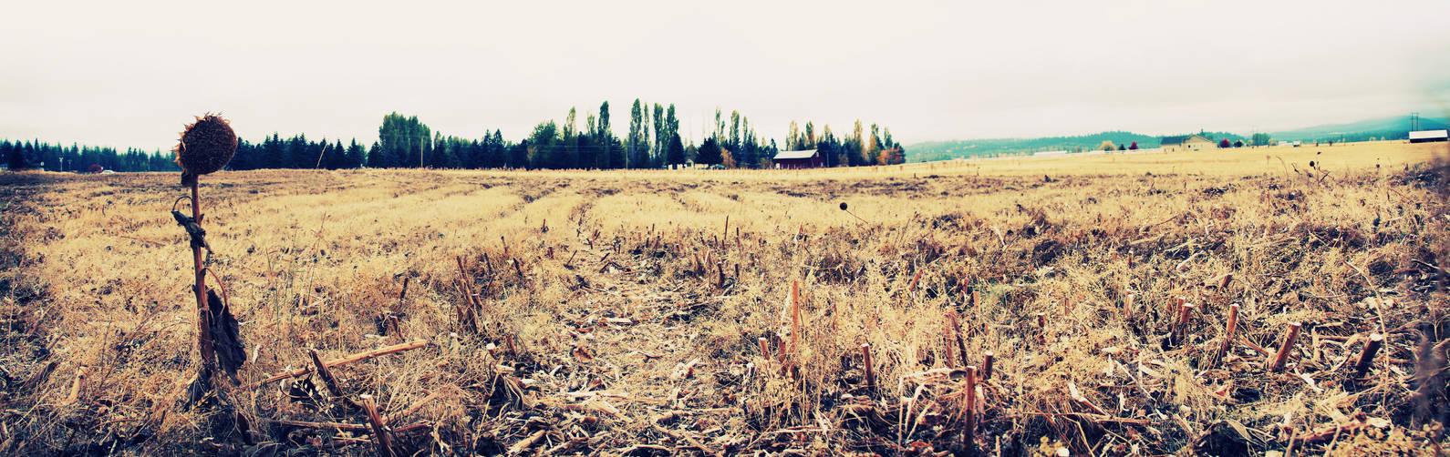 Lone Survivor by mackilvane