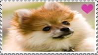 Pomeranian fan stamp by Nei-Ning