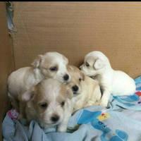My puppiesssss by Zimmer-Shine