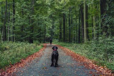 Puppy woods I by Bestarns