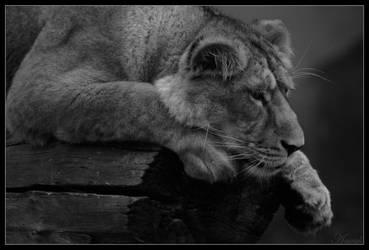 Looking on the grey side... by Wereldreizigster